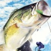 Top Angler: Real Bass Fishing (GCN) game cover art