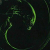 Alien 3 (SMS) game cover art