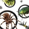 Clever Kids: Creepy Crawlies artwork
