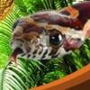 Discovery Kids: Snake Safari artwork