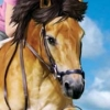 Horse Life artwork