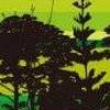 Kirihara Shoten Forest: Eigo @ DS (DS) game cover art