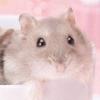 Motto! Hamster to Kurasou: Akachan ga Umareta yo artwork