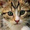 Petz: Catz 2 artwork