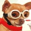 Petz: Dogz Talent Show (DS) game cover art