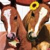 Petz: Horsez Family (DS) game cover art