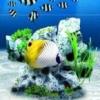 Sakana to Asobou! Aquazone DS - Kaisuigyo (DS) game cover art