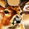 Cabela's Trophy Bucks artwork