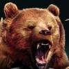 Cabela's Big Game Hunter: Pro Hunts artwork