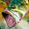 SEGA Bass Fishing artwork