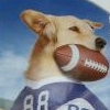 Jerry Rice & Nitus' Dog Football (WII) game cover art