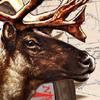 Cabela's Alaskan Adventures artwork