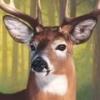 North American Hunting Extravaganza artwork