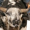 Pro Bull Riders: Out of the Chute artwork